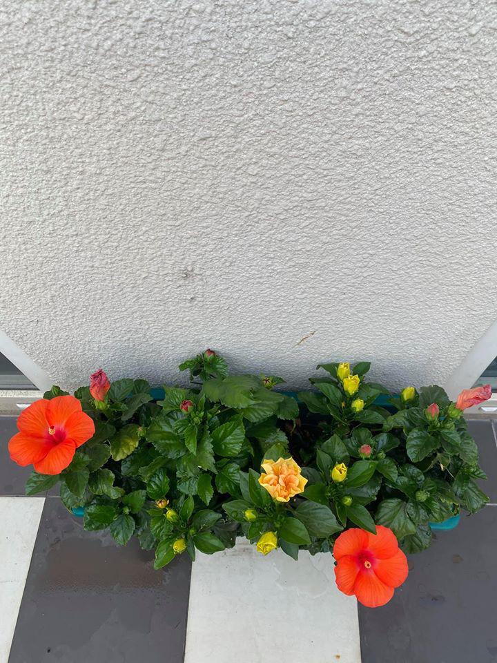 Hoa hậu Giáng My trồng rau và hoa quanh biệt thự trong lúc ở nhà trốn Covid-19 - Ảnh 11.
