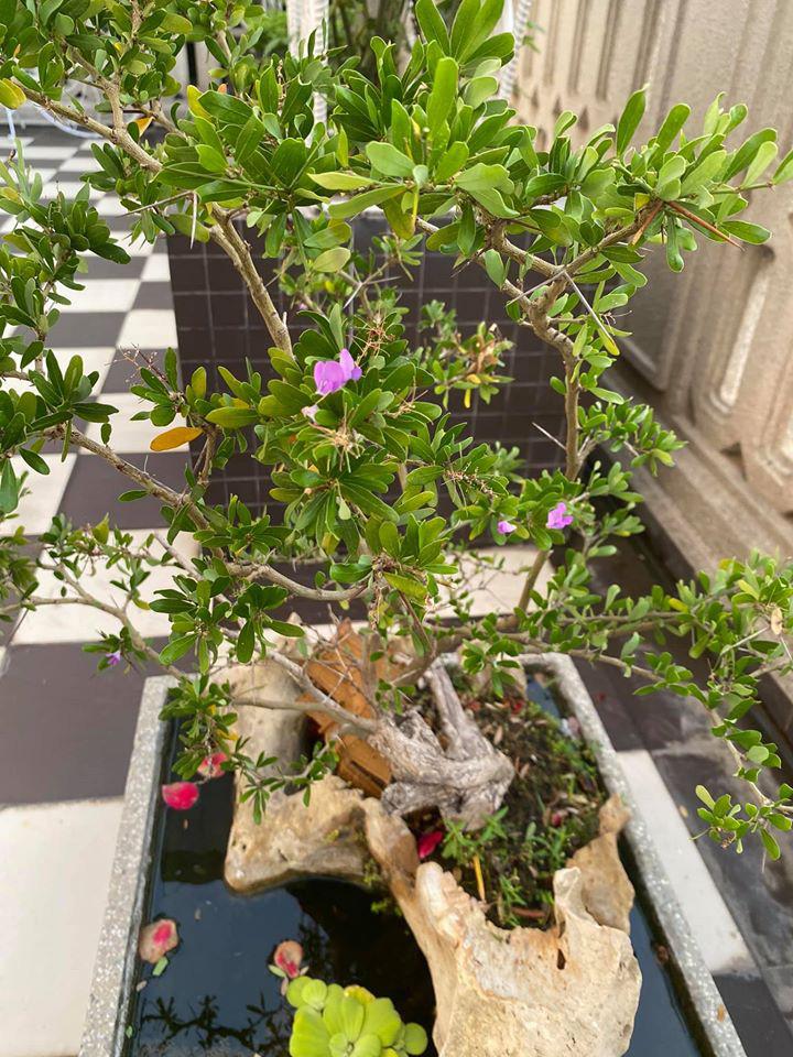 Hoa hậu Giáng My trồng rau và hoa quanh biệt thự trong lúc ở nhà trốn Covid-19 - Ảnh 12.