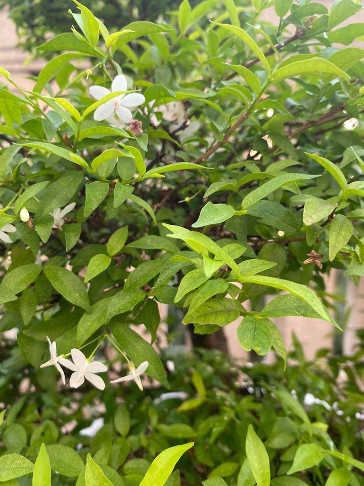 Hoa hậu Giáng My trồng rau và hoa quanh biệt thự trong lúc ở nhà trốn Covid-19 - Ảnh 13.