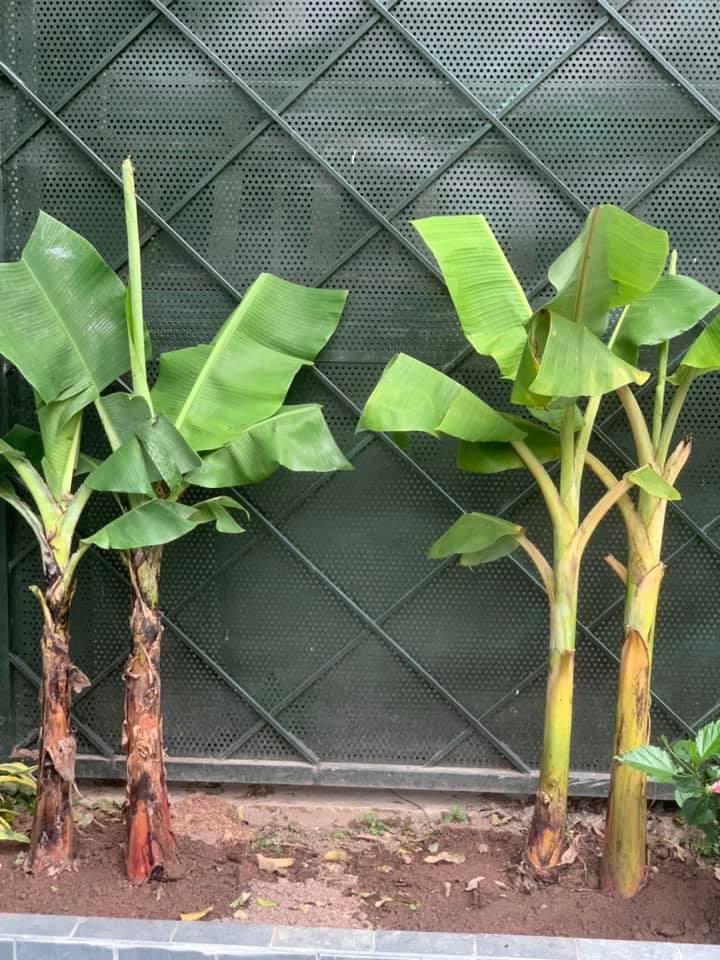 Khu vườn ngập hoa quả và rau xanh tại biệt thự của Hoa hậu Nguyễn Thị Huyền - Ảnh 23.