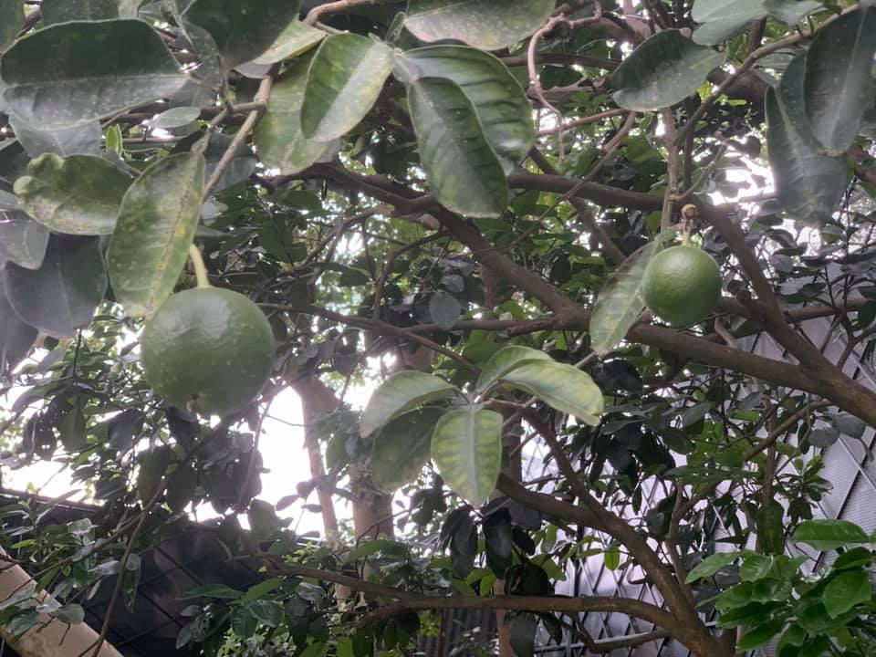 Khu vườn ngập hoa quả và rau xanh tại biệt thự của Hoa hậu Nguyễn Thị Huyền - Ảnh 25.