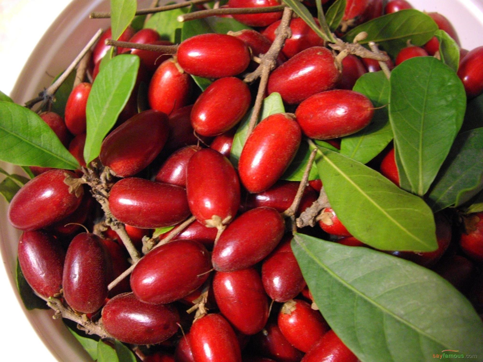Việt Nam có loại quả thần: có khả năng thay đổi vị giác con người, ăn vào thì dù nếm vị gì cũng ra vị ngọt - Ảnh 1.