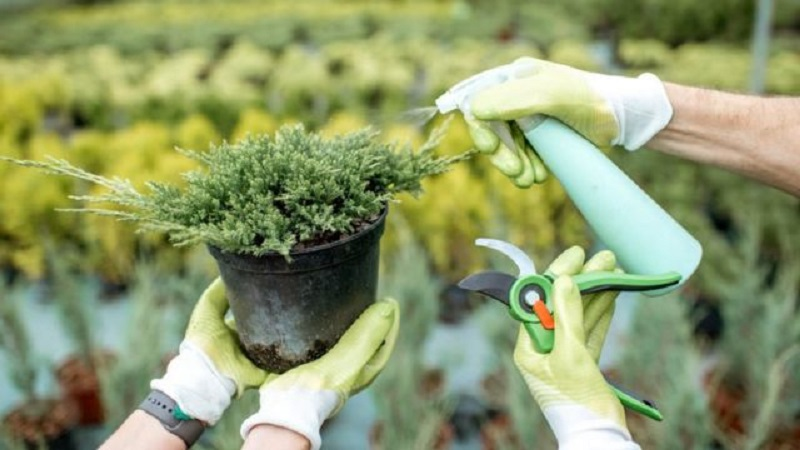 """9 mẹo tiết kiệm khi trồng rau sạch tại nhà, bạn sẽ thoát khỏi tình trạng """"tự trồng mà đắt hơn đi mua"""" - Ảnh 1."""
