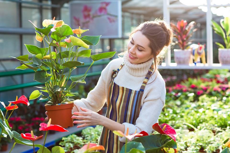 """9 mẹo tiết kiệm khi trồng rau sạch tại nhà, bạn sẽ thoát khỏi tình trạng """"tự trồng mà đắt hơn đi mua"""" - Ảnh 2."""