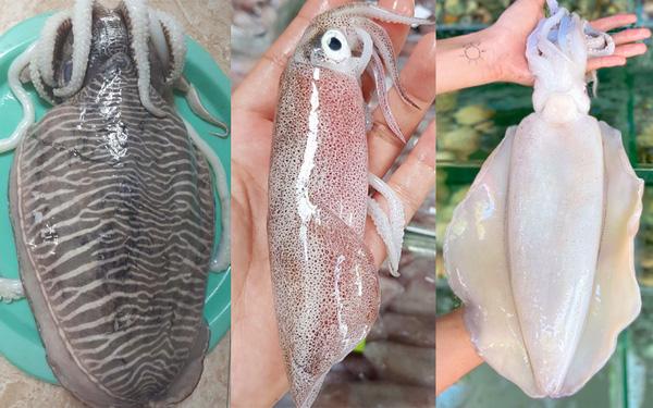 Dân vùng biển chỉ cách phân biệt 3 loại mực và cách chọn tươi ngon nhất