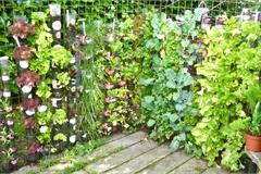 """9 cách tiết kiệm khi trồng rau sạch tại nhà, thoát khỏi tình trạng """"tự trồng đắt hơn đi mua"""""""