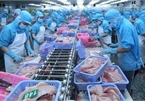Basa exporters' journey through troubled waters