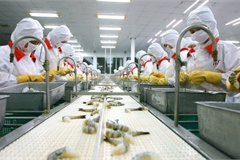 Pandemic continues to put hardship on enterprises in the Mekong Delta