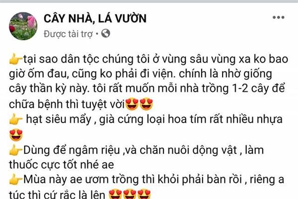 Sau mại dâm, Facebook cho quảng cáo cả giống cây anh túc ở Việt Nam