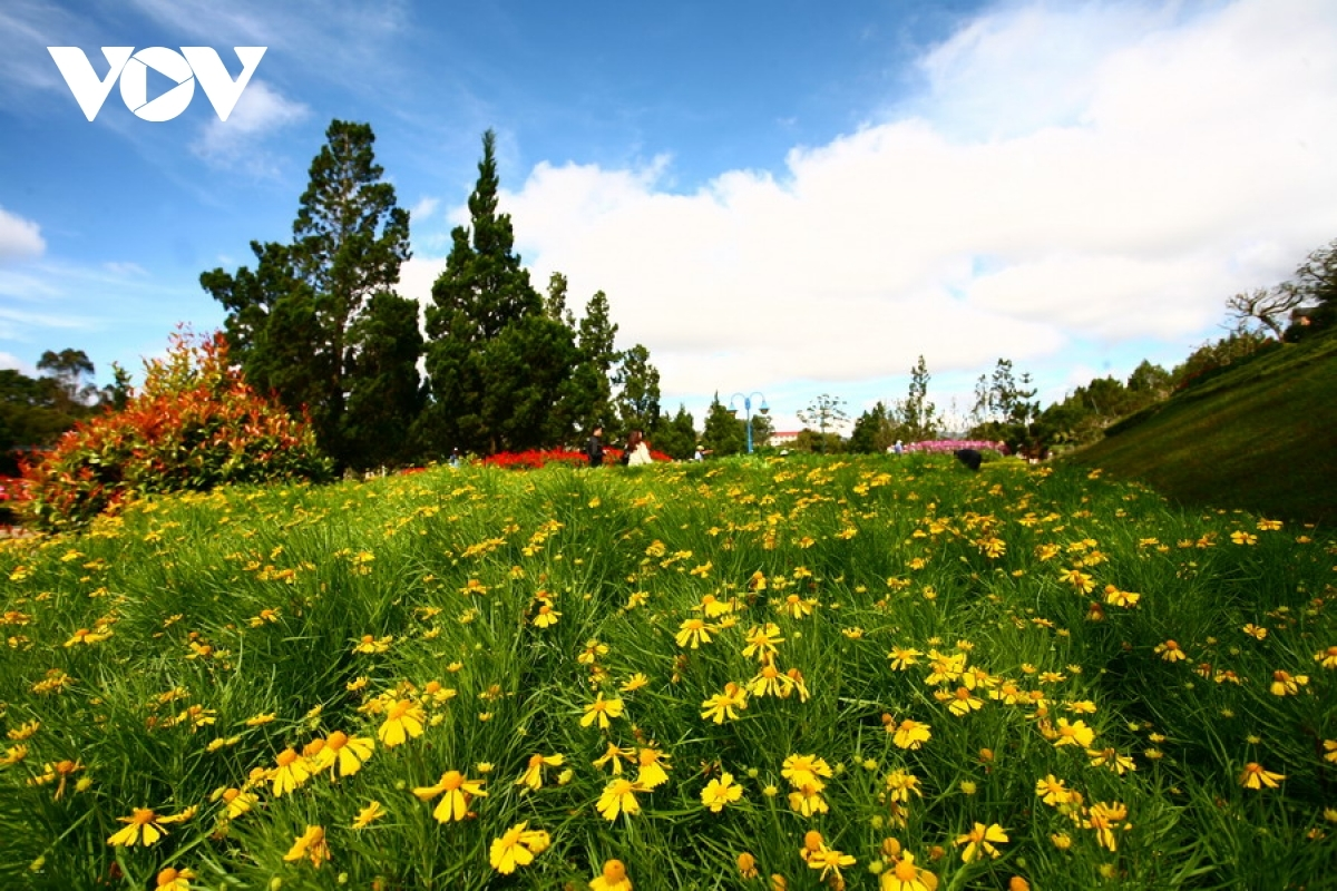 Da Lat is also well known for an abundance of flowers throughout the city.