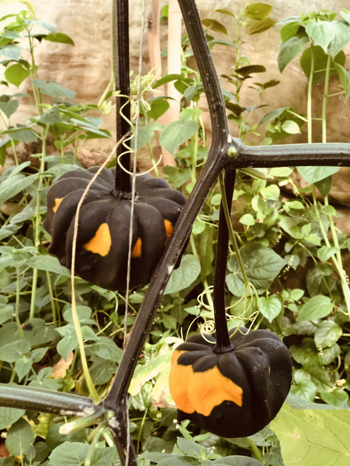 They are primarily used for Halloween decorations.
