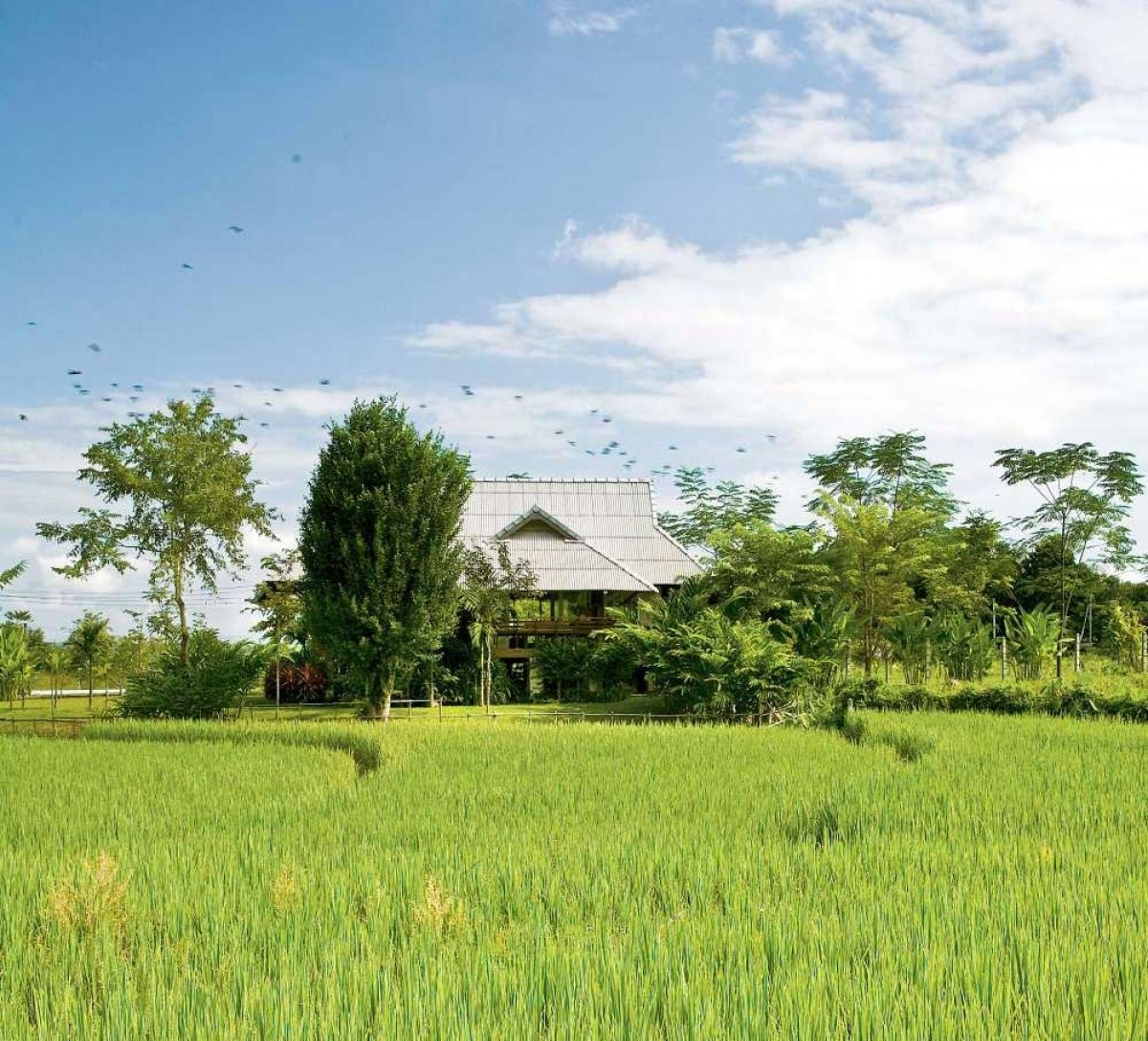 Ngôi nhà gỗ giữa đồng bát ngát, có các ngọn núi bao quanh: Chọn gỗ làm vật liệu chính giúp ngôi nhà trông hài hòa, phù hợp với bối cảnh phía sau là ngọn núi lớn, phía trước là cánh đồng lúa bao la.