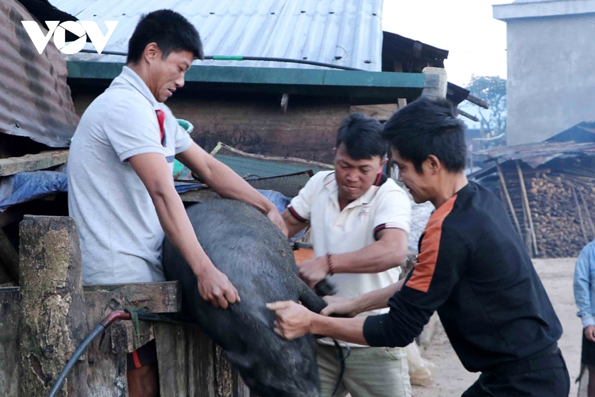 Ha Nhi people often slaughter pigs to celebrate Tet, considering this as the result of breeding in the year.