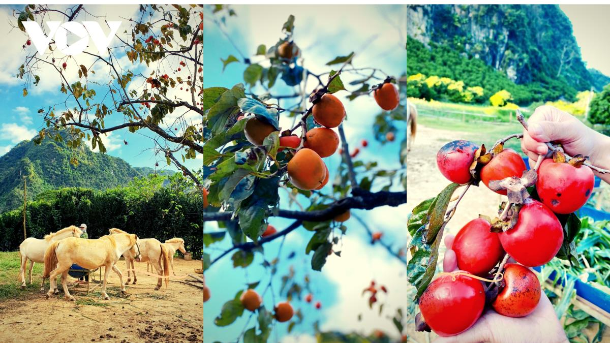 Tasting the area's ripe fruit in September and October is a tasty activity.