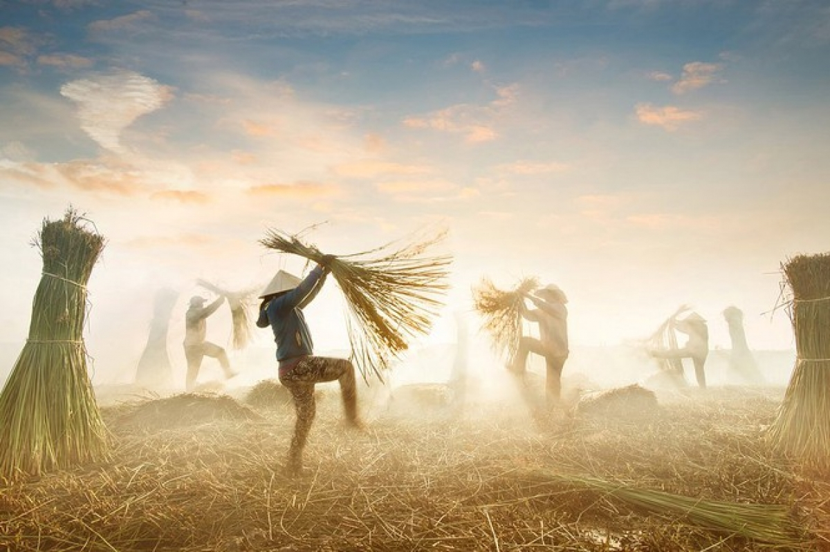 A photo titled 'Sedge Harvest' by local photographer @hoacarol depicts farmers as they harvest the sedge which they will later use in order to weave mats.
