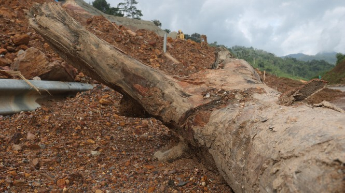 A giant tree falls on La Son-Tuy Loan highway, serving to hamper the flow of traffic and requiring a huge cleanup operation.