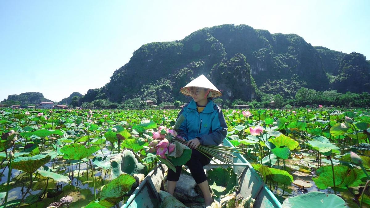 Theo chia sẻ của người quản lý, đầm sen này là giống sen Nhật nên nở hoa gần như quanh năm chỉ trừ mùa đông khi trời quá lạnh.