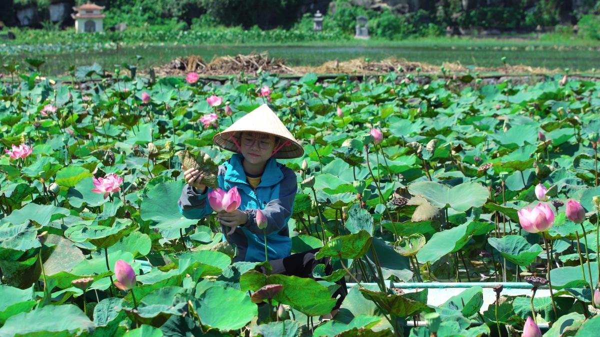 Mới đây, trên nhiều hội nhóm về du lịch, mùa sen muộn Ninh Bình tiếp tục là câu chuyện được nhiều người quan tâm.