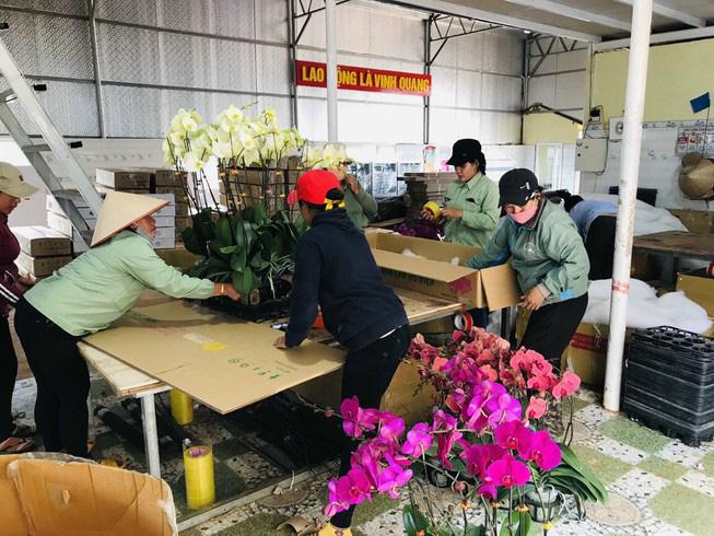 Hoa tươi nhập từ Trung Quốc đội lốt hoa Đà Lạt - Ảnh 2.