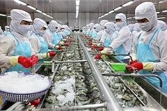 Minh Phu Seafood shares fall on investigation of tax evasion