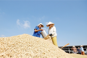 Stage set for scale-up of nation's rice