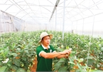 VN agriculture out in the cold for credit