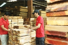 Vietnam's plywood suppliers under scrutiny over practices