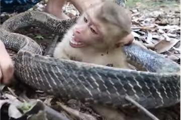 YouTuber Hậu Cáo ngược đãi động vật quý hiếm