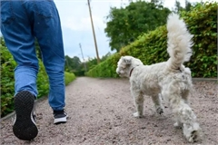 Kiếm gần 40.000 USD/năm nhờ dắt chó đi dạo, chạy việc vặt ở Anh