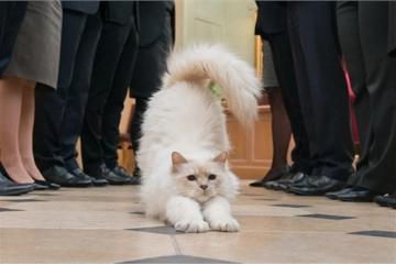 Khách sạn, resort sang trọng dùng chó, mèo thu hút khách