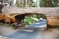 8 đường hầm độc đáo trên thế giới