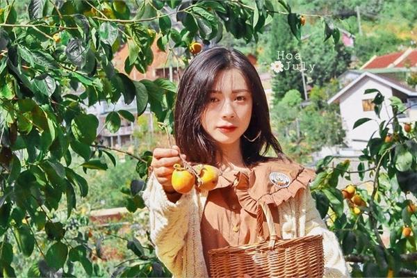 The persimmon gardens in Da Lat