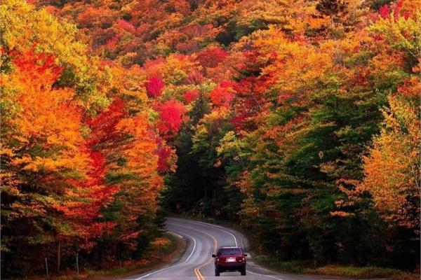 Cung đường cao tốc phủ kín rừng cây lá đỏ ở Mỹ