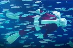 Ông già Noel bơi lội trong thủy cung ở Nhật Bản