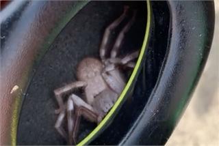 Phát hiện nhện độc bên trong tai nghe
