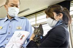 Chú mèo được vinh danh vì cứu người bị ngã xuống cống