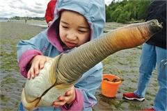 Món ngon từ ốc vòi voi có vẻ ngoài kỳ dị