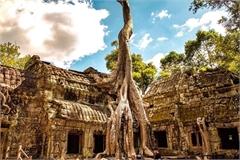 Những ngôi đền, chùa nằm dưới bộ rễ cây cổ thụ