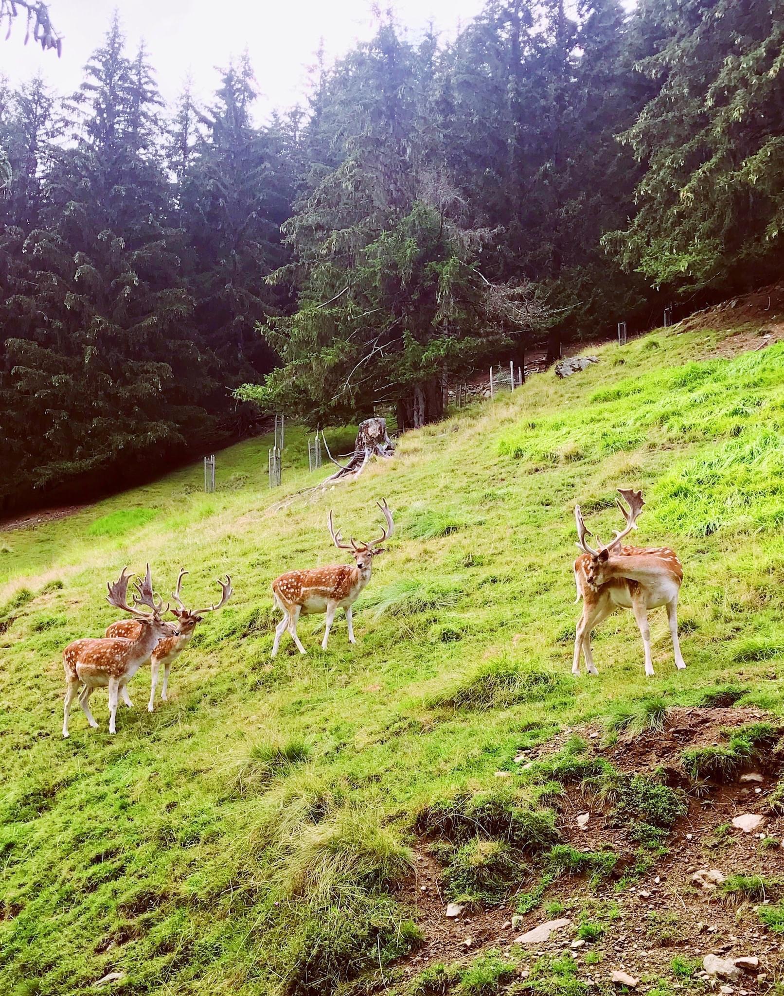 Haute-Savoie anh 8