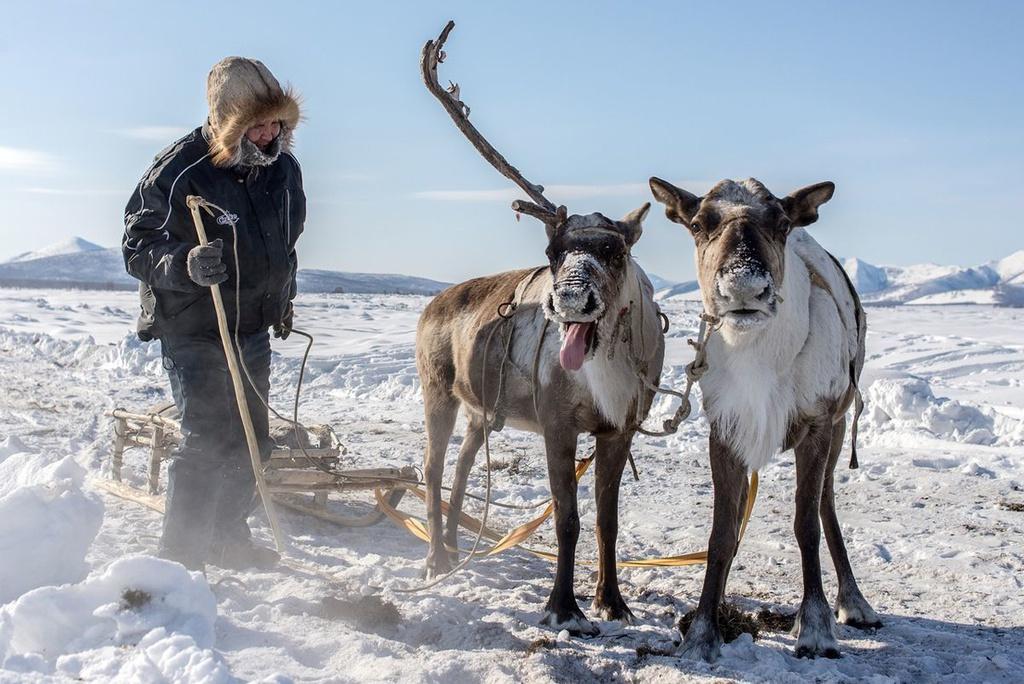 Kham pha ngoi lang lanh nhat the gioi hinh anh 5 Reindeers-Oymyakon-yakutia.jpg