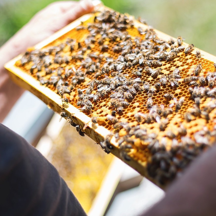 Bi mat dang sau loai mat ong dat nhat the gioi hinh anh 5