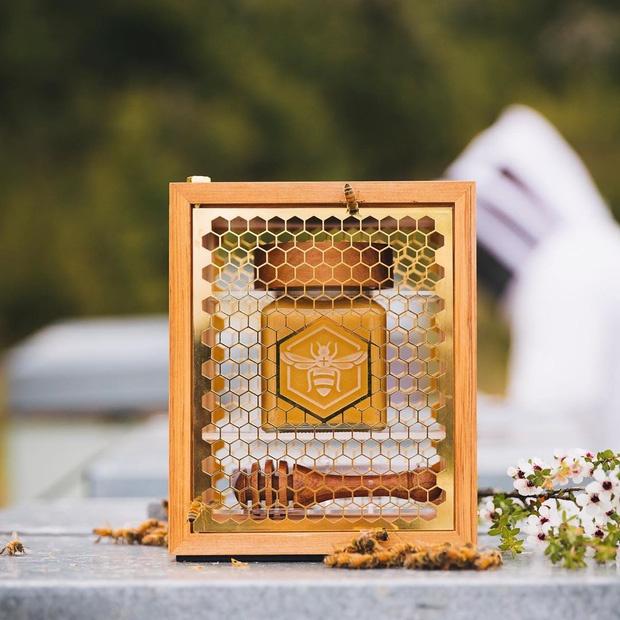 Bi mat dang sau loai mat ong dat nhat the gioi hinh anh 6