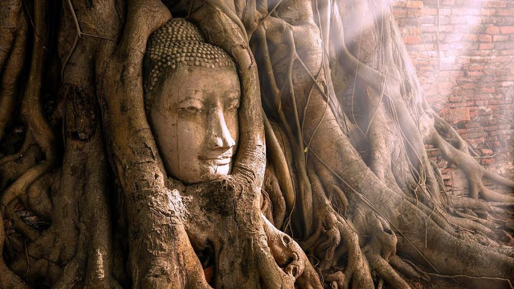 Tuong mat Phat 700 tuoi an minh trong re cay o Thai Lan hinh anh 2